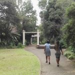 IMG_20160412_145501 tree-lined walkway in the KwaZulu-Natal National Botanical Garden