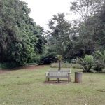 IMG_20160412_145506 lawn bench in the KwaZulu-Natal National Botanical Garden
