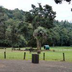 IMG_20160412_145552 tree-lined walkway in the KwaZulu-Natal National Botanical Garden