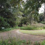 IMG_20160412_145635 tree-lined walkway in the KwaZulu-Natal National Botanical Garden