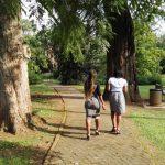IMG_20160412_150416 tree-lined walkway in the KwaZulu-Natal National Botanical Garden