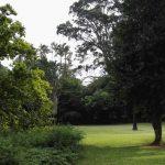 IMG_20160412_150529 green lawns in the KwaZulu-Natal National Botanical Garden