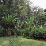 IMG_20160412_150536 lush plants in the KwaZulu-Natal National Botanical Garden