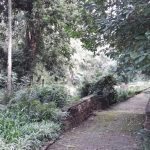 IMG_20160412_150812 tree-lined walkway in the KwaZulu-Natal National Botanical Garden