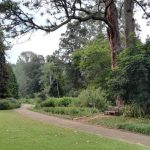 IMG_20160412_151208 tree-lined walkway in the KwaZulu-Natal National Botanical Garden