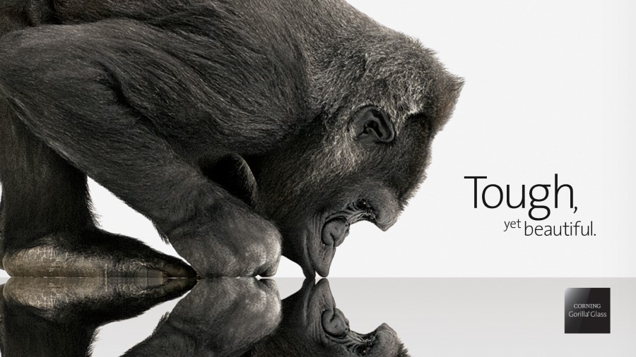 gorilla kissing glass with reflection