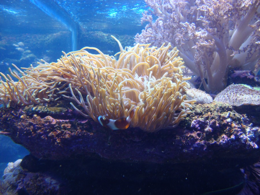 fish-at-ushaka-marine-world-theme-park-in-durban-south-africa