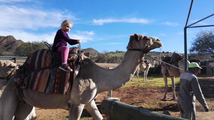 Camel Rides at Wilgewandel Holiday Farm in Oudtshoorn (2017